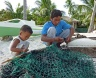Preparing the bait (sea urchins)